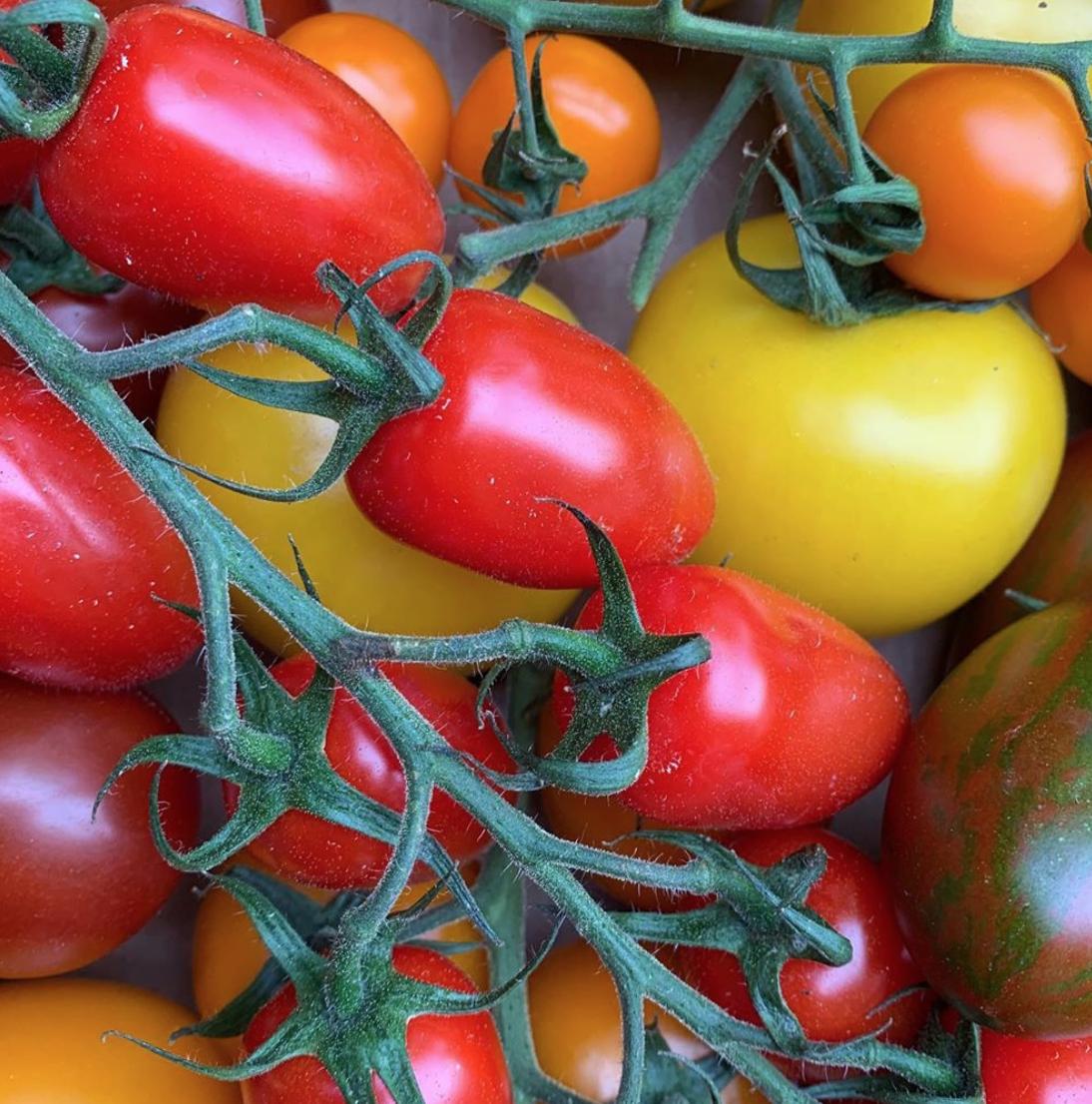 SmithandBrock_IsleofWhite_Tomatoes