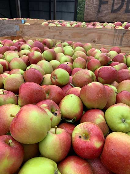 roughwayfarm-apples-smith-and-brock