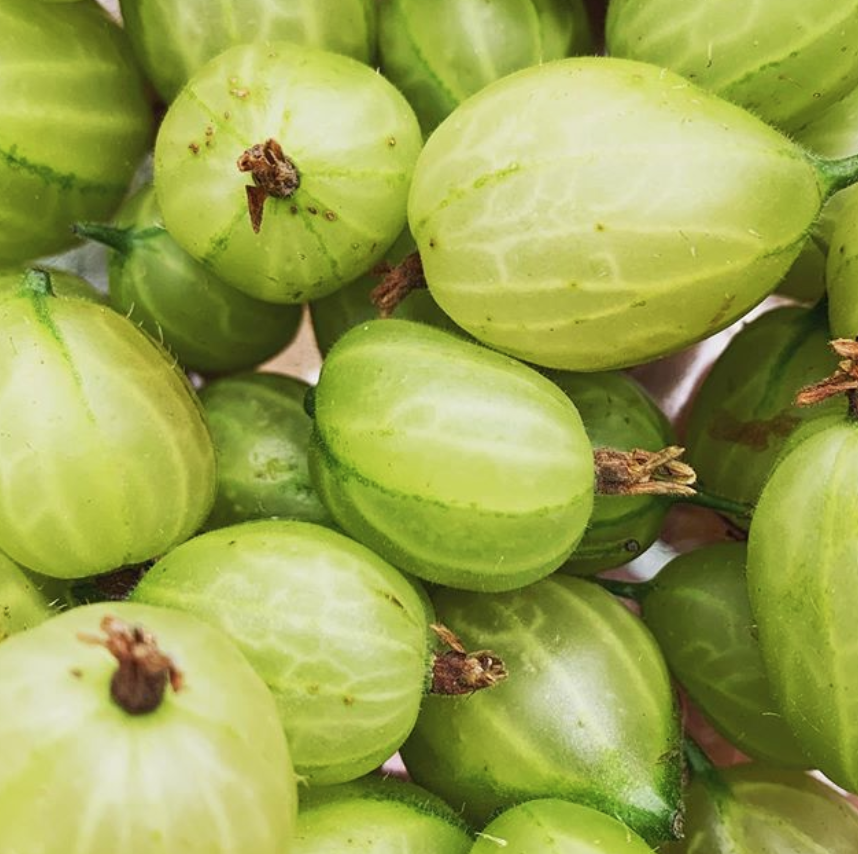 smith and brock gooseberries