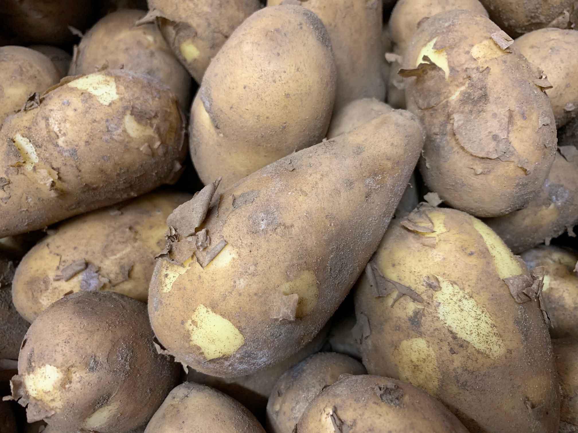 koffman-potato-smith-and-brock