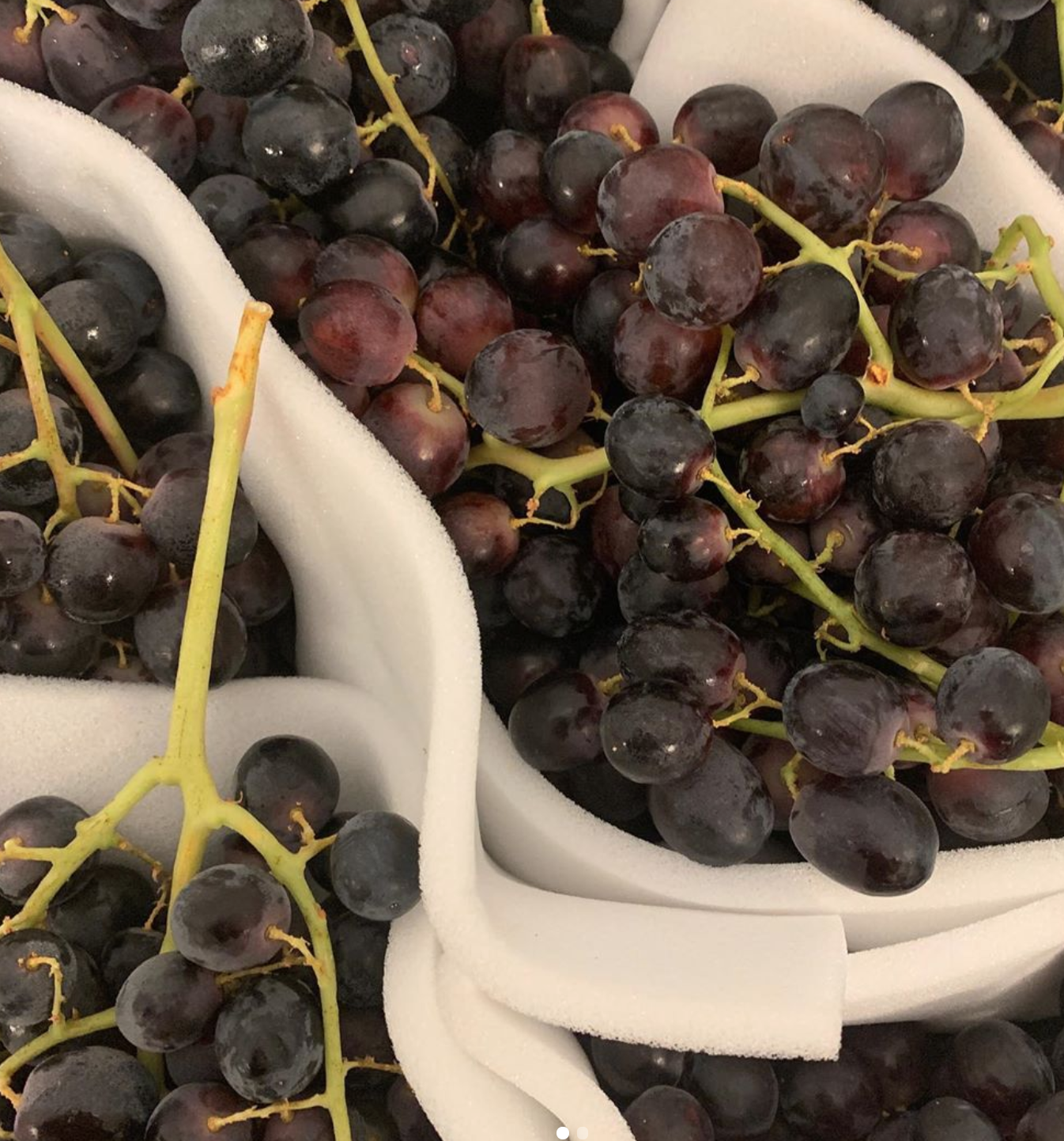 smith-brock-seedless-italian-grapes
