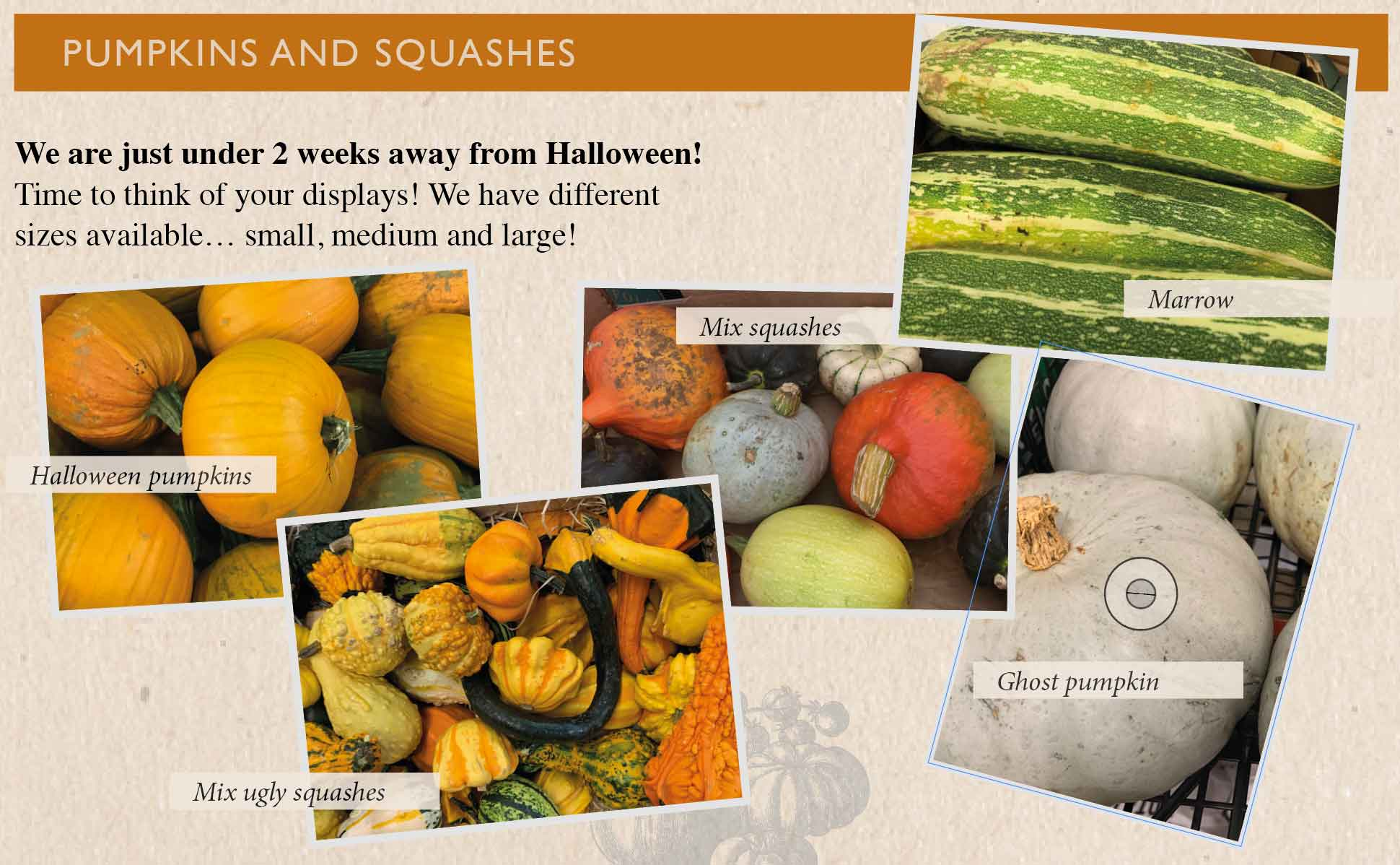 pumpkins-squashes-smith-and-brock