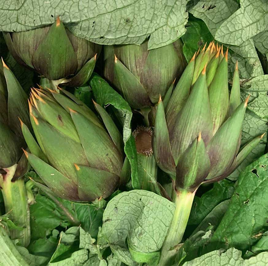 Italian-artichokes-smith-and-brock