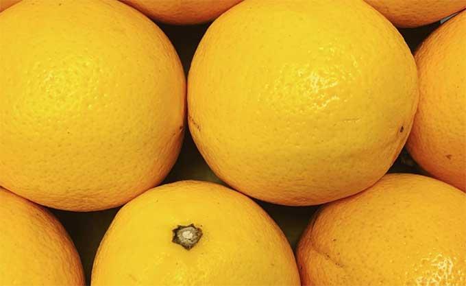 meyer-lemon-smith-and-brock