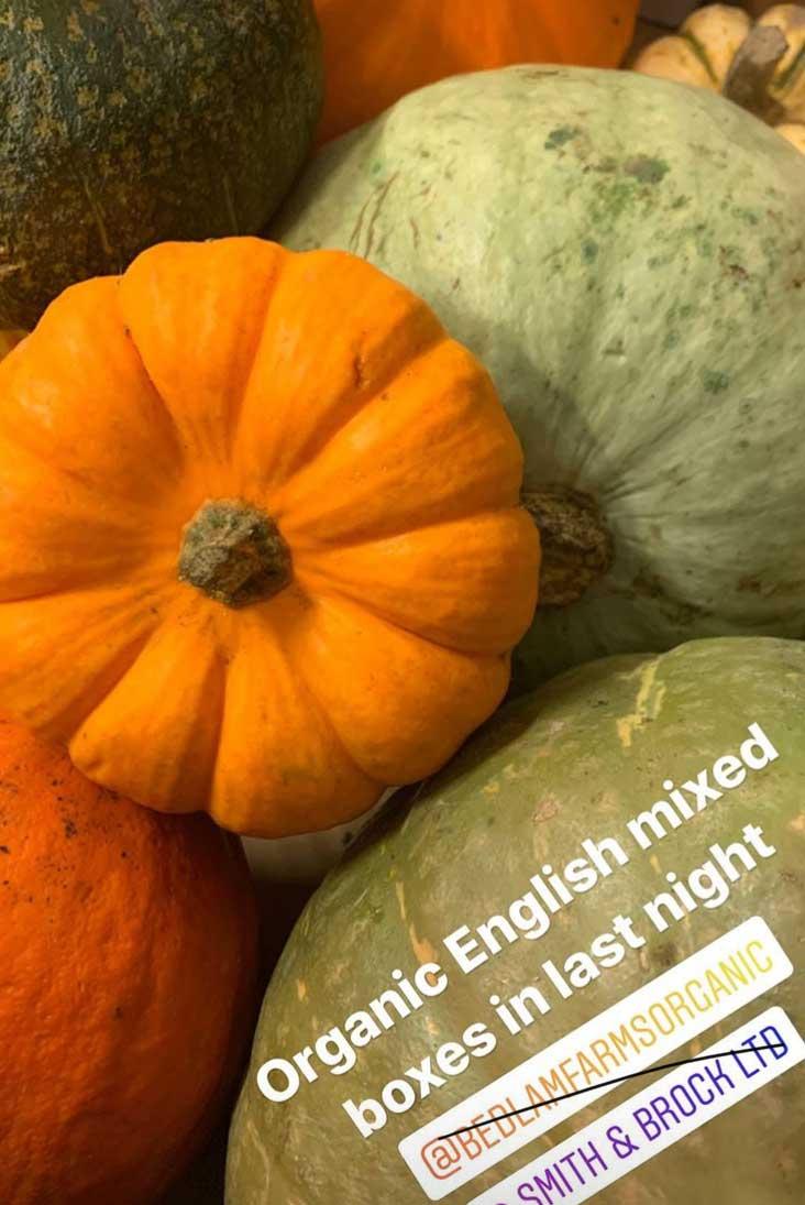 pumpkin-smith-and-brock