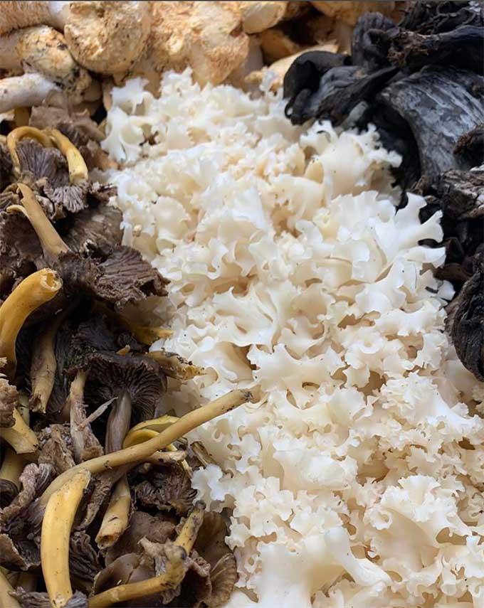 woodland-mushroom-mix-smith-and-brock