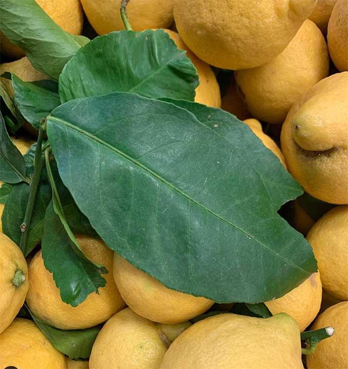 sicilian-lemons-smith-and-brock