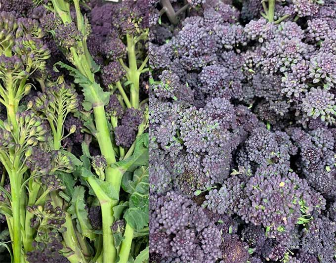 smith-and-brock-purple-sprouting-broccoli