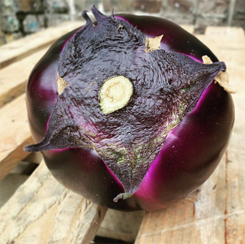 round-Italian-aubergine-smith-and-brock